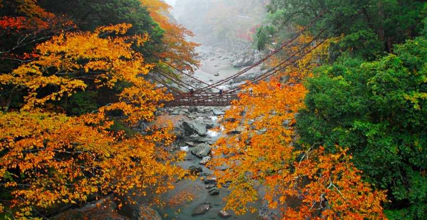 日本四國德島紅葉楓葉推薦祖谷的蔓橋