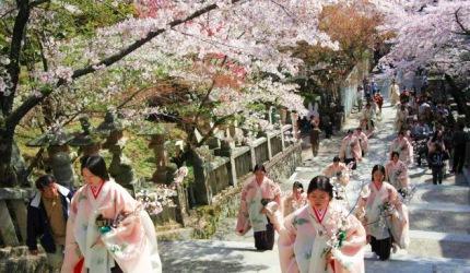 日本山陽山陰櫻花推薦香川金刀比羅宮