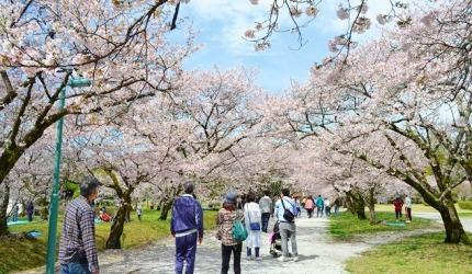 日本山陽山陰櫻花推薦高知鏡野公園
