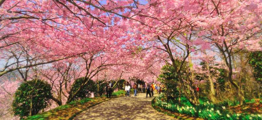 日本山陽山陰櫻花推薦德島八百萬神之御殿
