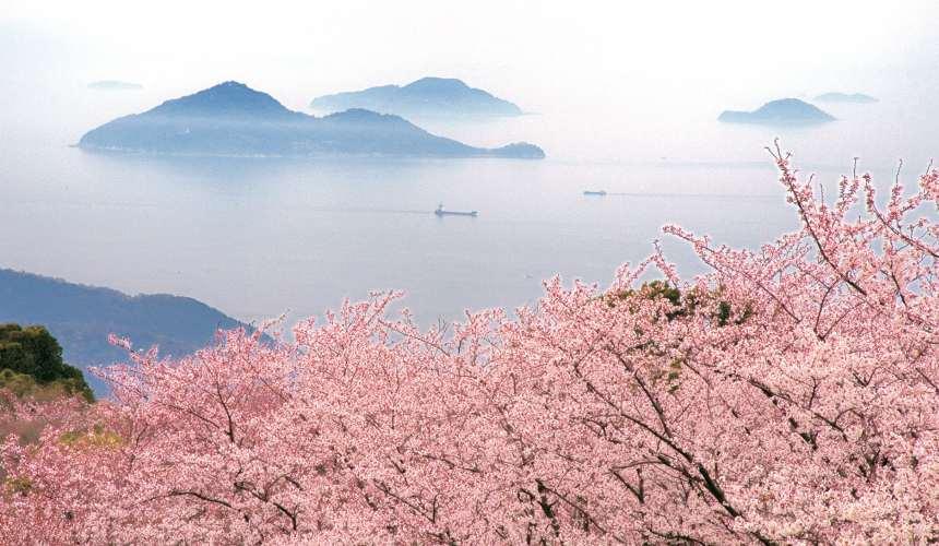 香川縣紫雲出山櫻花