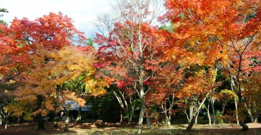 日本四國愛媛紅葉楓葉推薦稻荷山公園