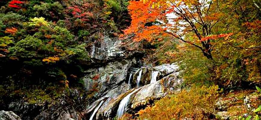 日本四國高知紅葉楓葉推薦瀨戶川溪谷