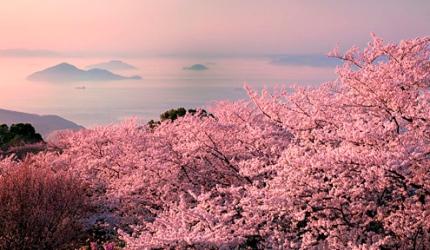 日本山陽山陰櫻花推薦香川紫雲出山