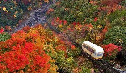 四國自由行搭乘觀光巴士「KOTOBUS IYA VALLEY」前往德島祖谷搭乘纜車,享受夢幻秋天紅葉絕景