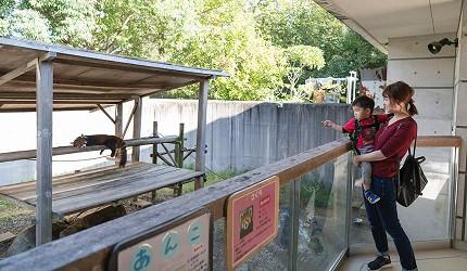 德島市官方觀光網站「Fun!Fun!TOKUSHIMA」的觀光示範行程「孩子們也能開心享受的德島之旅」