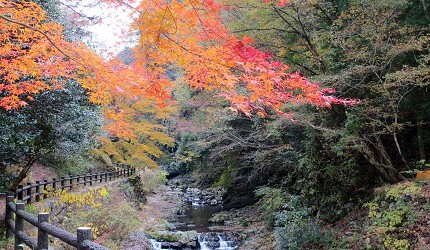 四国香川超漂亮秘境向日葵之乡「满浓町」花海打卡三霞洞溪谷看瀑布推荐推介的美霞洞溪谷的红叶枫叶美景
