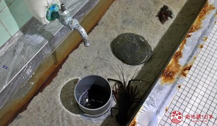 親子旅遊必去推薦四國水族館超另類騎乘海豚好刺激學校泳池養大魟魚的室戸廢校水族館的洗手槽裡有龍蝦