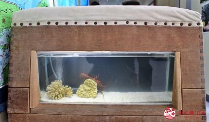 親子旅遊必去推薦四國水族館超另類騎乘海豚好刺激學校泳池養大魟魚的室戸廢校水族館的跳箱裡有魚有蝦