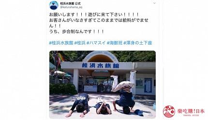 親子旅遊必去推薦四國水族館超另類騎乘海豚好刺激學校泳池養大魟魚的桂濱水族館的幽默Twitter配信