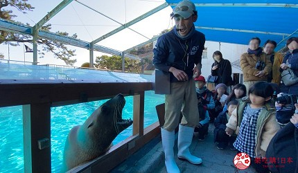 親子旅遊必去推薦四國水族館超另類騎乘海豚好刺激學校泳池養大魟魚的桂濱水族館的海獅秀中海獅從櫥窗探出頭來打招呼