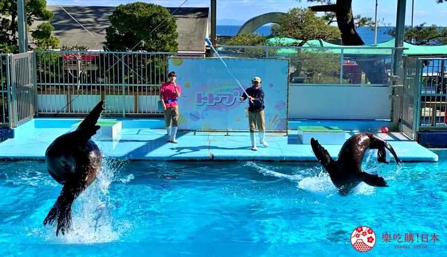 親子旅遊必去推薦四國水族館超另類騎乘海豚好刺激學校泳池養大魟魚的桂濱水族館的海獅秀