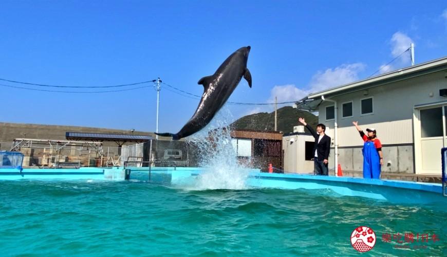 親子旅遊必去推薦四國水族館超另類騎乘海豚好刺激學校泳池養大魟魚的室戶海豚中心的一日教練體驗