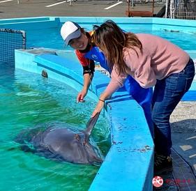 親子旅遊必去推薦四國水族館超另類騎乘海豚好刺激學校泳池養大魟魚的室戶海豚中心的摸海豚初體驗