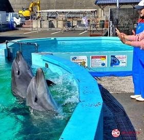 親子旅遊必去推薦四國水族館超另類騎乘海豚好刺激學校泳池養大魟魚的室戶海豚中心的和海豚說掰掰體驗