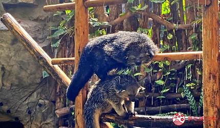 親子旅遊必去推薦四國水族館超另類騎乘海豚好刺激學校泳池養大魟魚的高知縣立野市動物公園的叢林博物館的淋浴的熊貍