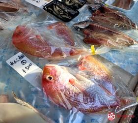 四國深度旅遊推薦推介弘人市場吃鰹魚日曜市買日本水果帶你看最道地的高知的弘人市場的必逛日曜朝市可找到的新鮮漁獲